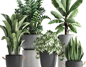 Collection of Exotic Plants 392 3D