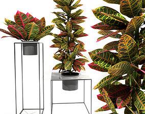 3D Croton plants set