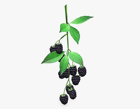 Blackberries with leaves on branch 3D model