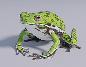 Barking Tree Frog - Animated 3D model