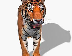 Awesome Tiger - 3d model animal