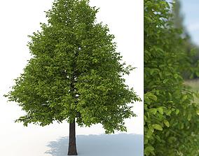 3D model Black Tupelo Tree No 1