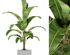 3D Plants collection 174