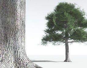 EVERYPlant English Oak LowPoly 08 --18 VR / AR ready