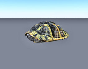 3D model Animated rigged walking turtle