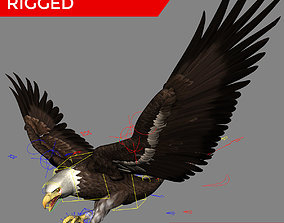 3D Bald Eagle Professionally Rigged Textured rigged 1
