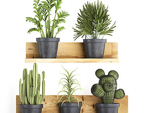 Collection of Exotic Plants 410 3D model