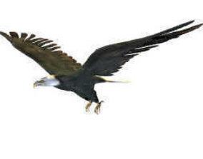 Black Eagle 3D model 3d