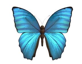 3D asset Butterfly Model