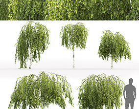 3D model Betula Pendula Youngii 01