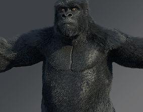 3D model Gorilla african
