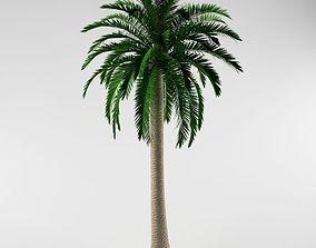 3D model leaf Palm tree