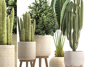 3D model Collection of Exotic Plants plants