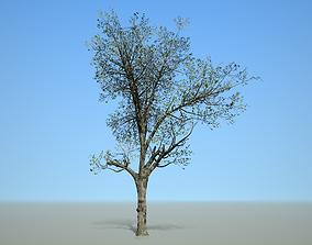 Broadleaf 003 3D asset