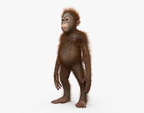 3D Orangutan Baby HD