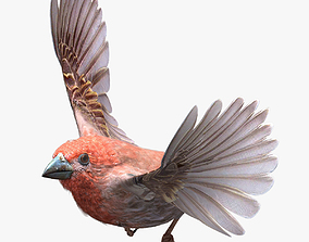 House finch - rigged - animated - Standard PBR 3D asset