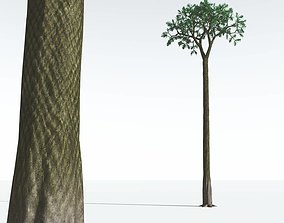 3D EVERYPlant Spiny Scale Tree 10 --15 Models--