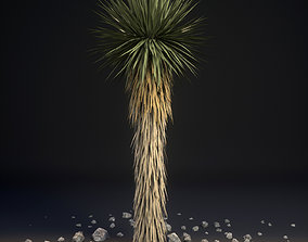 3D Yucca Palm Trees Yucca brevifolia