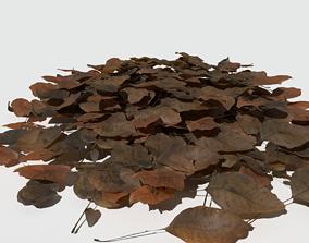 Dry Walnut Leaves Pack 3D model