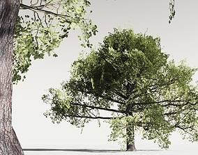 EVERYPlant English Oak LowPoly 18 -- 10 Models 3D asset