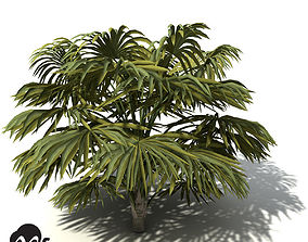 3D model XfrogPlants Australian Cabbage Palm