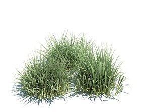 Green Grass 3D