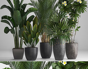 3D frangipani Collection of ornamental plants in pots