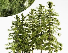 Alaska Cedar tree collection 3D