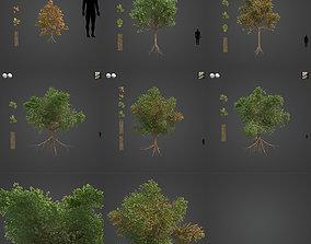 3D 2021 PBR Downy Oak Collection - Quercus Pubescens