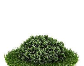 Cactus Like Green Bush 3D