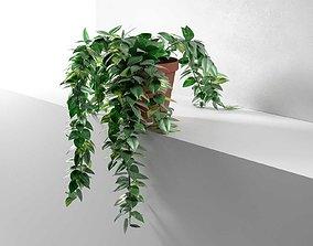 Epipremnum in Pot 3D
