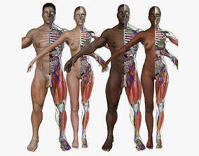 3D model Ultimate Full Body Anatomy Collection