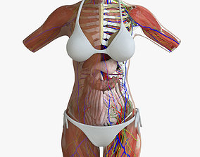 Ultimate African American Female Torso 3D model