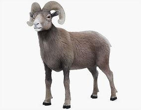 Ram Rigged with Fur 3D model