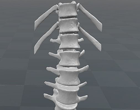 Vertebral column T11-L5 female - age 20 3D model