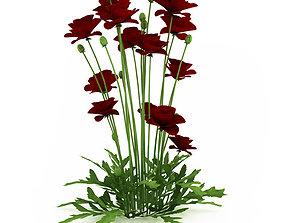 Iranian poppy 3D