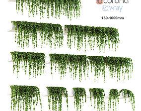 Ivy for shelves 12 models 3D