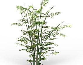 3D model Bamboo Tree 01