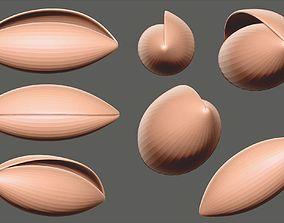 Sea shell - olive-shaped 3D model seashell