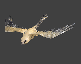 3D model realtime kite animated