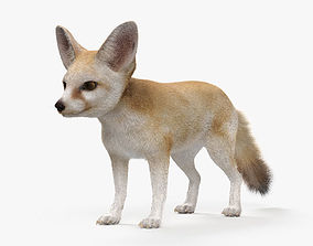 Fennec Fox HD 3D