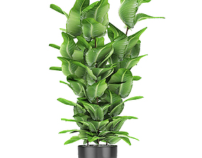 3D model decor Plant in Pot Flowerpot Exotic Plant