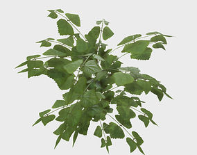 Low Poly PBR Stinging Nettle 3D asset