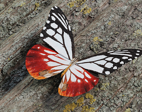 White Chestnut Tiger butterfly - realistic insect 3D asset