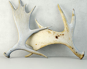 3D Naturally-Shed Moose Antlers 2