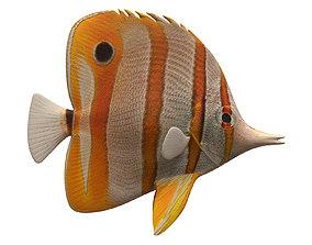 butterfly fish 3D model