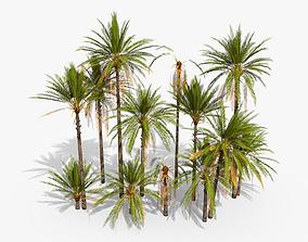 3D model Phoenix Dactylifera Palm Tree