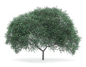 English Oak Quercus robur 11m 3D model