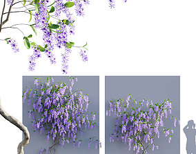Petrea Volubilis - Queen Wreath - 03 3D