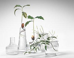 3D model Water Plants in Vases